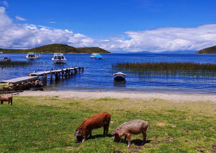 Isla del Sol bolivia photo 8