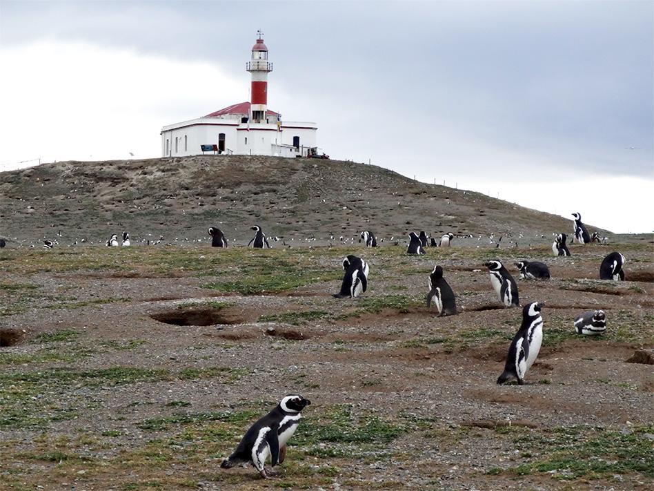penguins_isla_magdelena