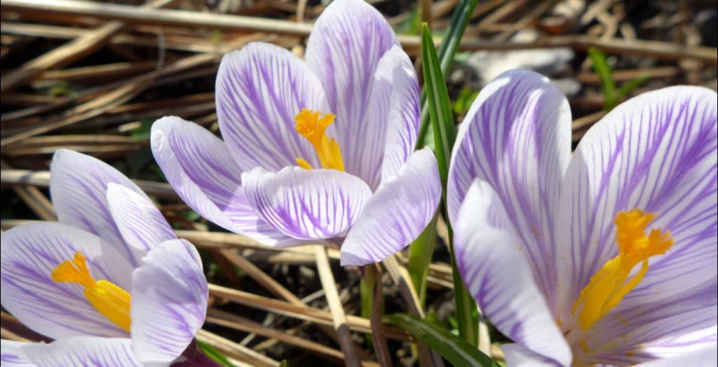 helsinki flowers spring